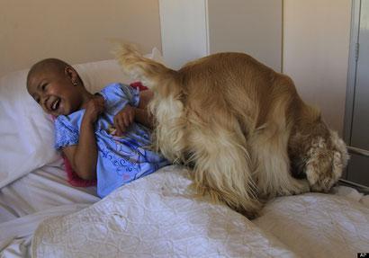 Perros que ayudan emocionalmente a niños con cáncer en Ecuador.
