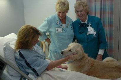 Un juez italiano autoriza a un perro a visitar a su ama en el hospital.